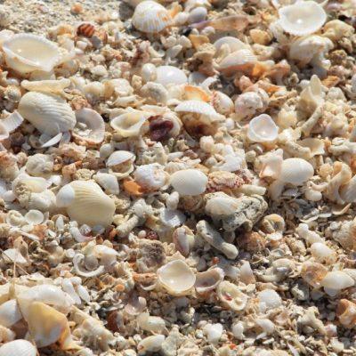 морски съкровища и находки
