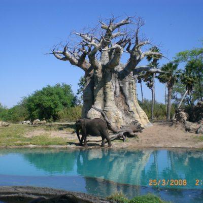 Animal Kingdom - третия по популярност парк на Дисни в Орландо