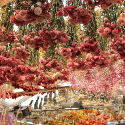 Пазарът за цветя в Амстердам - сухи цветя провиснали по целия таван
