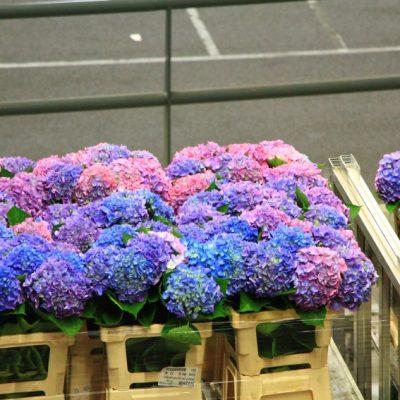 На борсата за цветя в Аалсмеер всеки ден се осъществява 70% от световната търговия с цветя