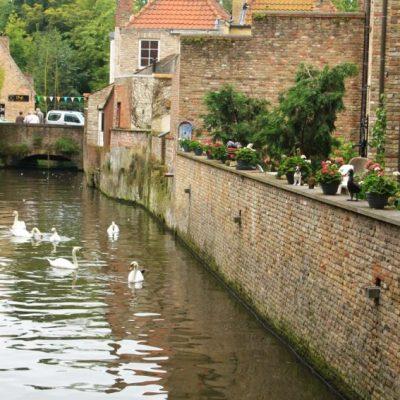 Лебеди и патици могат да се срещнат на много места по каналите на Брюж