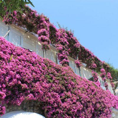 разходка из остров Капри