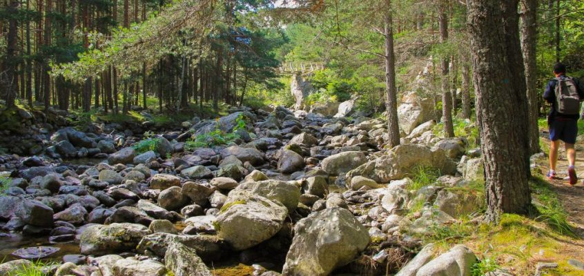 Екопътека Бели Искър – живописна разходка из вековна гора