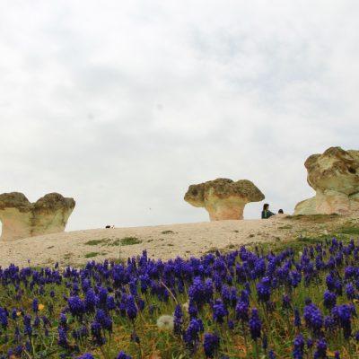Каменните гъби край с. Бели пласт