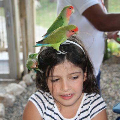 папагалите в Ocean world