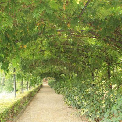 Зелен тунел в градините Боболи