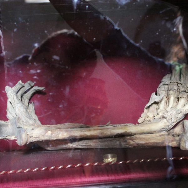 откъснатите от вълци ръце на крадец, който се опитал да извади меча от камъка