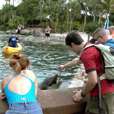 Храненето на делфини и контакта ми с делфини винаги е бил изключително емоционален