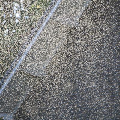Не, това не са водни пръски или мъгла, а милионите мушички наоколо