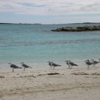 Не знам нарочно или не, но чайките се движеха под строй