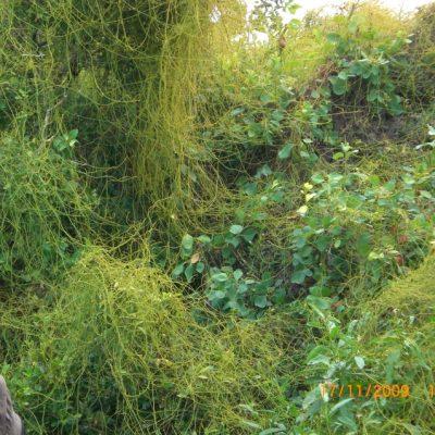 тучните зелени джунгли прекрасно допълваха усещането за рай